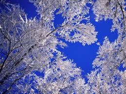 WinterTree