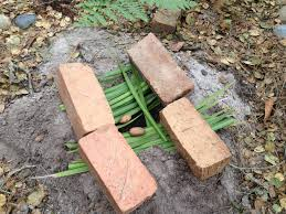 A close-up photo of an alleged squirrel trap