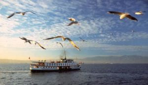 Sea Gulls Sabian Symbols